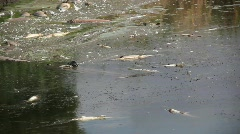 River Pollution 3 Stock Footage