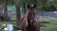 Horse in cemetery close Stock Footage