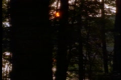 Forest at sunset 1 Stock Footage