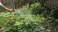 Man Watering Organic Home Garden Footage