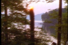 Forest at sunset 2 Stock Footage