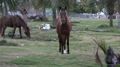 Horses in cemetery wide Stock Footage