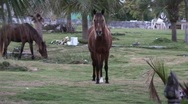 Stock Video Footage of horses in cemetery wide