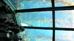 Monterey Bay Aquarium Stock Footage