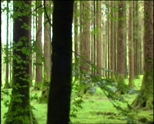 Green Woodland (Tracking) - stock footage
