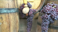 Stock Video Footage of Vintage Wine