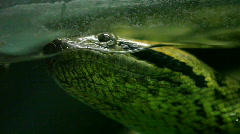 Snake close up Stock Footage