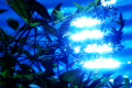 High Speed Camera : Water Sunlight Reflections and Leaves 1 Loop Footage