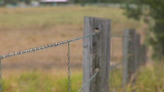 fence focus HQ - stock footage