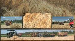 Split screen threshing harvest 001 Stock Footage