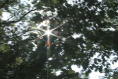 Walking Under Canopy  Stock Footage