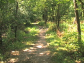 Walking on Forest Trail  Stock Footage