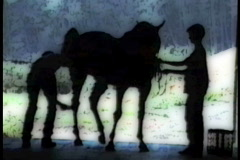 Horse Grooming Silhouette 1aa Stock Footage