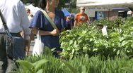 Stock Video Footage of Green Market (1 of 4)