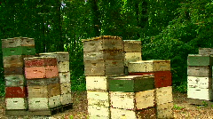 Wooden framed beehives stacked in field. Stock Footage