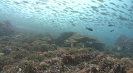Huge school of Fish swim over camera and reef Stock Footage