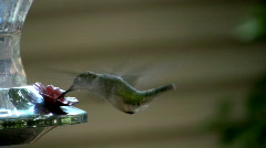 Humming bird02 Stock Footage