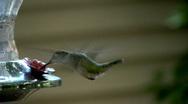 Humming bird02 Stock Footage