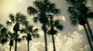 Stock Video Footage of Palm Trees