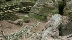 Funny rodent family 02 Stock Footage