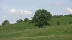 Stock Video Footage of Green tree on hillside.