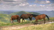 Stock Video Footage of Three horse