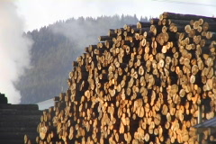 Sawmill 06 Stock Footage