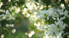Flowers_in_israel03 Stock Footage
