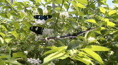 Butterfly Clip 5 of 7 Stock Footage
