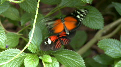 Butterfly Clip 1 of 7 Stock Footage