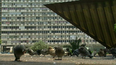 Pigeons at Rabin square 1 Stock Footage
