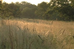 African grasslands pan  - stock footage