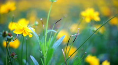 Flowers. variable focus Stock Footage