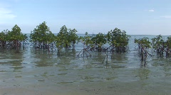 Mangrove barrier 1 Stock Footage