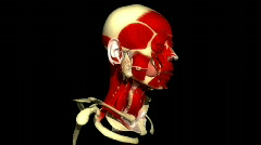 Human head rotating and showing the musculature and vein system Stock Footage