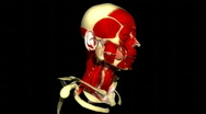 Stock Video Footage of Human head rotating and showing the musculature and vein system