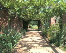 Grape Vines Stock Footage