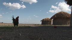 Masai village chicken Stock Footage