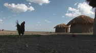 Stock Video Footage of masai village chicken