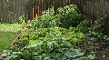 Man Watering Organic Home Garden - POV Footage