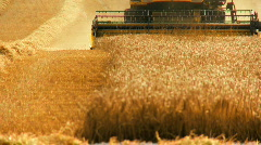 Wheat Harvest Stock Footage