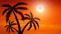 Auringonnousua ja palmuja kasvaa Arkistovideo