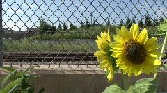 City sunflower Stock Footage
