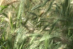 grass close zoom out - stock footage