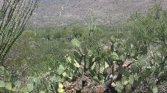 Desert scene in Arizona 2 Stock Footage