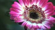 Flower Power Stock Footage