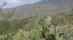 Desert scene in Arizona 5 Stock Footage
