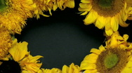 Sunflower Wreath Stock Footage