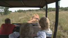 South Africa Jeep Safari 14 Lions Stock Footage