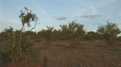 South Africa Jeep Safari 03 Stock Footage